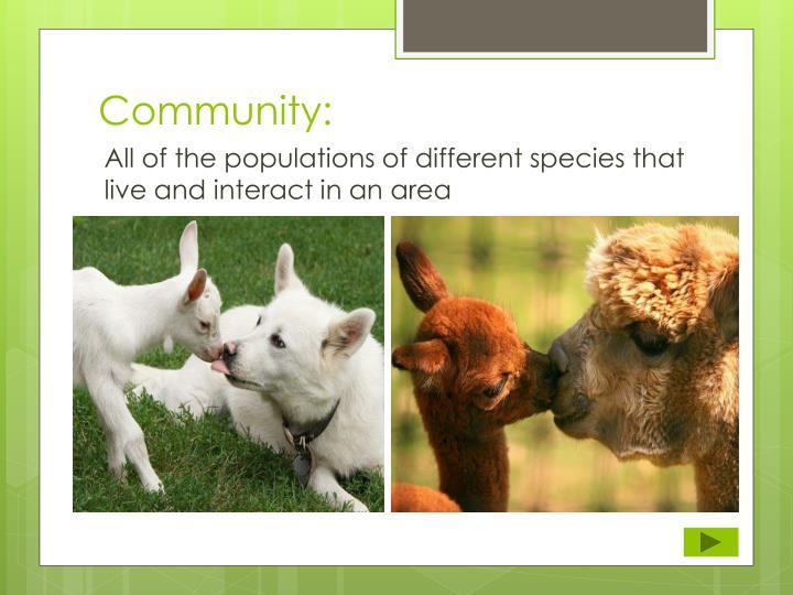 Community: