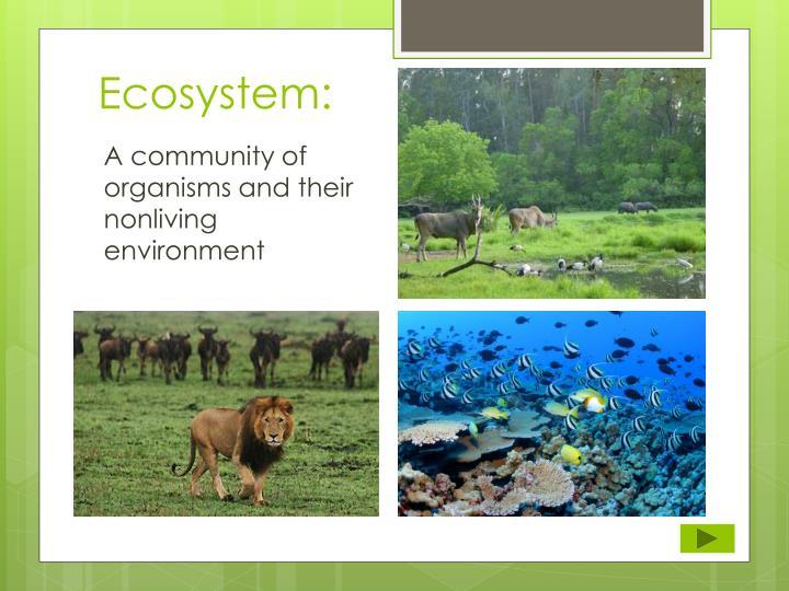 Ecosystem: