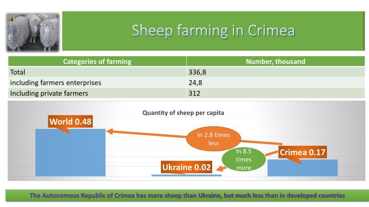 Sheep farming in Crimea