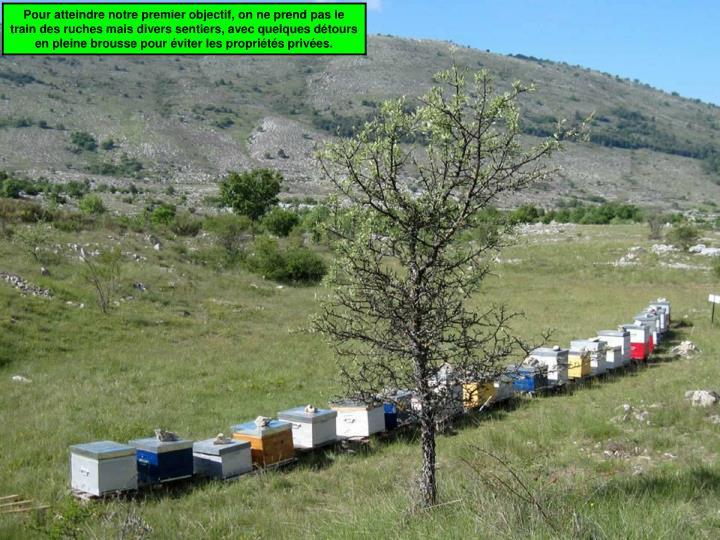 Pour atteindre notre premier objectif, on ne prend pas le train des ruches mais divers sentiers, avec quelques détours en pleine brousse pour éviter les propriétés privées.