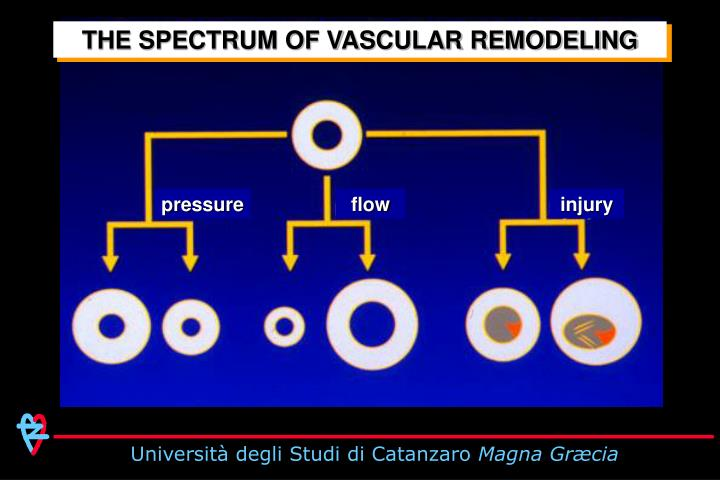 THE SPECTRUM OF VASCULAR REMODELING