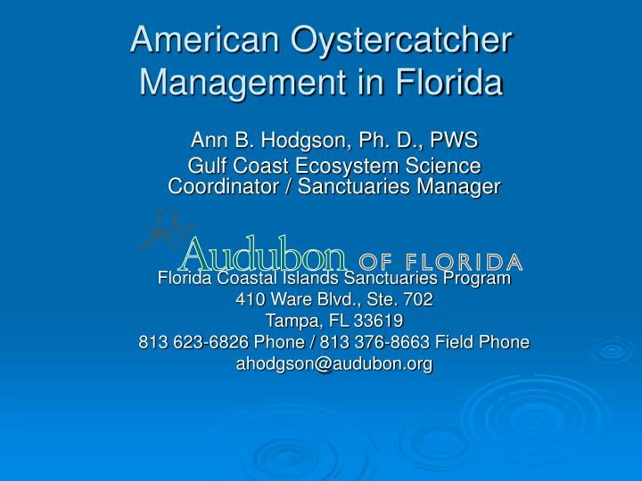 American oystercatcher management in florida