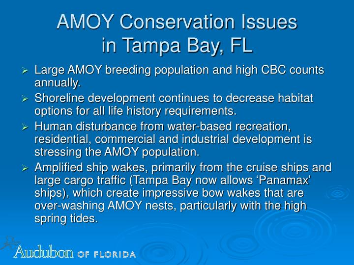 Amoy conservation issues in tampa bay fl