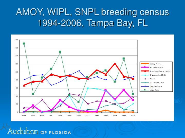 AMOY, WIPL, SNPL breeding census 1994-2006, Tampa Bay, FL
