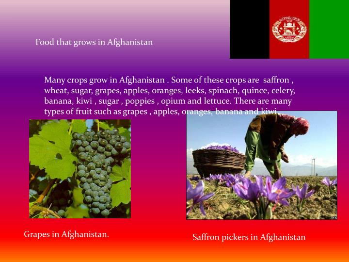 Food that grows in Afghanistan