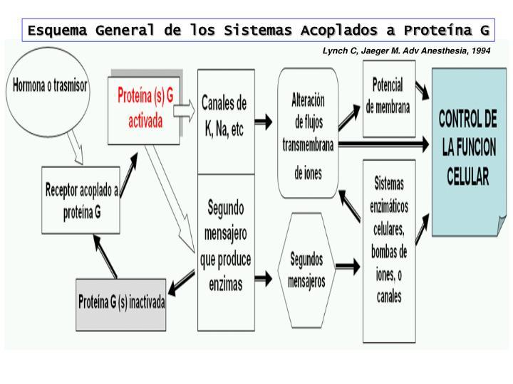Esquema General de los Sistemas Acoplados a Proteína G