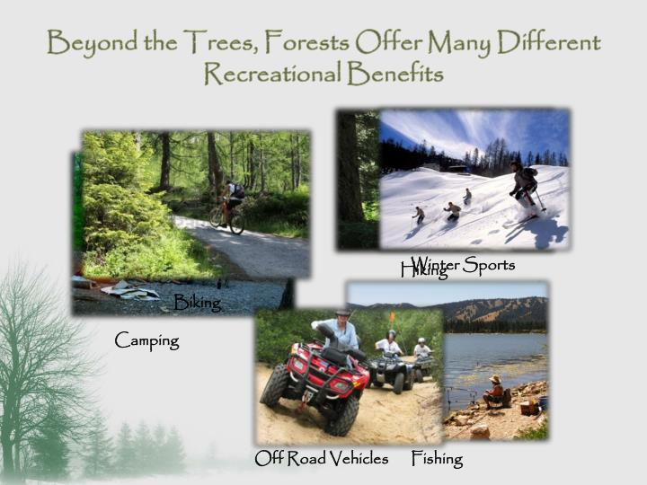 Beyond the Trees, Forests Offer Many Different Recreational Benefits