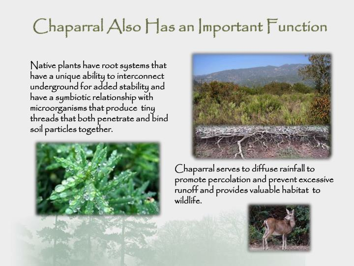 Chaparral Also Has an Important Function