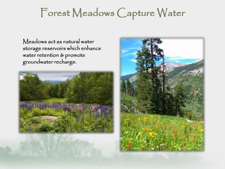 Meadows act as natural water storage reservoirs which enhance water retention & promote groundwater recharge.
