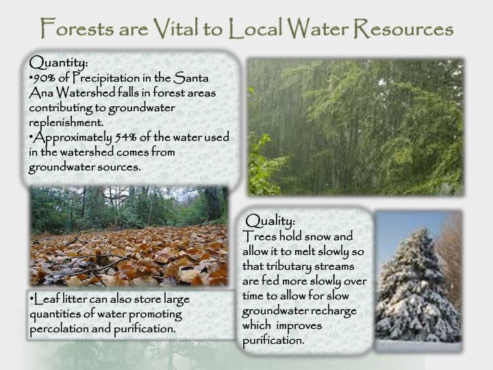 Forests are Vital to Local Water Resources
