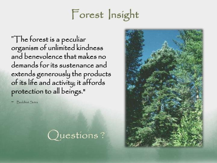 Forest  Insight