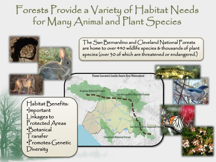 Forests Provide a Variety of Habitat Needs for Many Animal and Plant Species