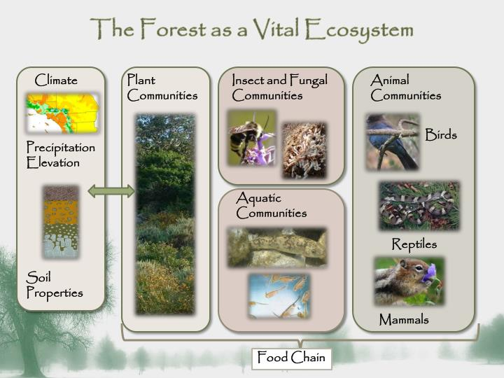 The Forest as a Vital Ecosystem