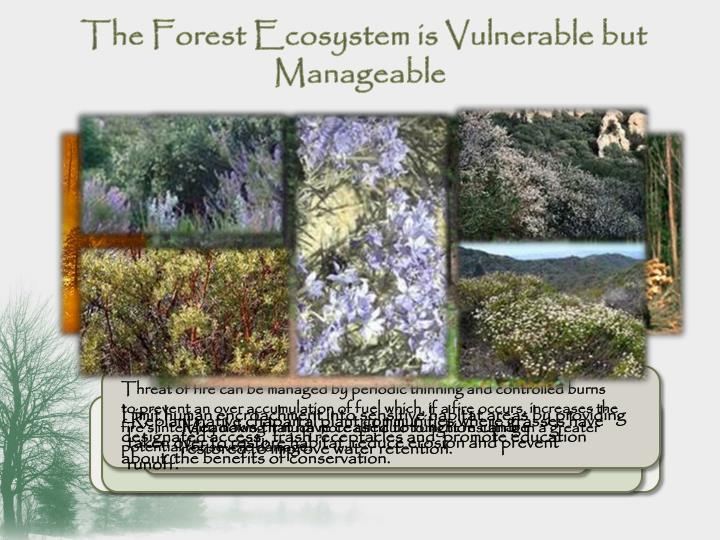 The Forest Ecosystem is Vulnerable but Manageable