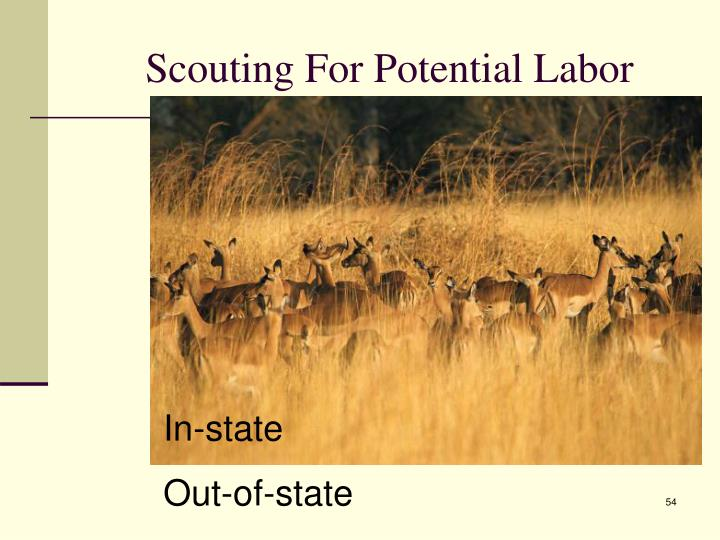 Scouting For Potential Labor