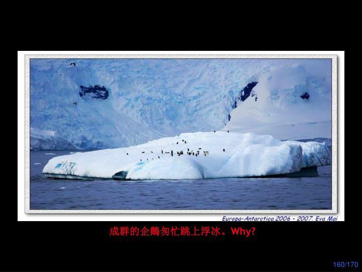 成群的企鵝匆忙跳上浮冰。