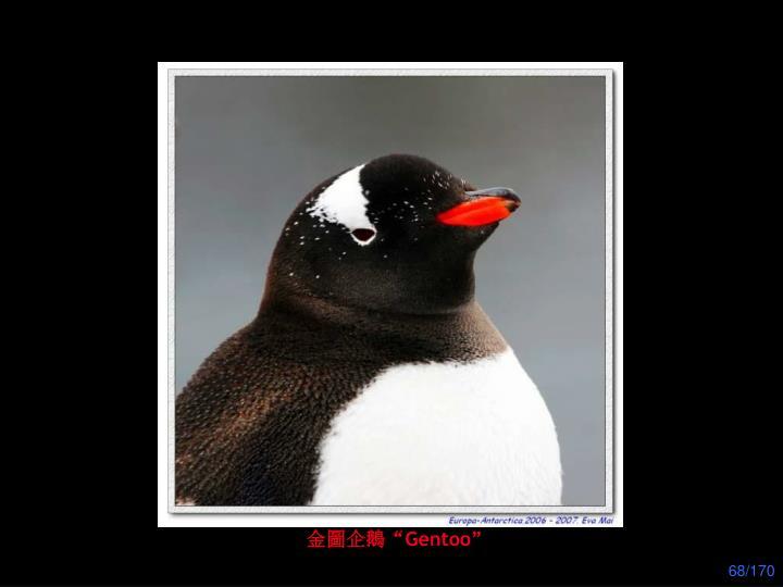"""金圖企鵝"""""""