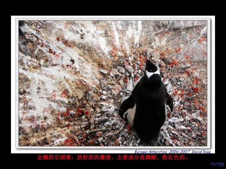 企鵝的石頭窩:放射狀的糞便,主要成分是磷蝦,粉红色的。