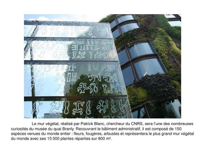 Le mur vgtal, ralis par Patrick Blanc, chercheur du CNRS, sera lune des nombreuses curiosits du muse du quai Branly. Recouvrant le btiment administratif, il est compos de 150 espces venues du monde entier : fleurs, fougres, arbustes et reprsentera le plus grand mur vgtal du monde avec ses 15 000 plantes rparties sur 800 m.