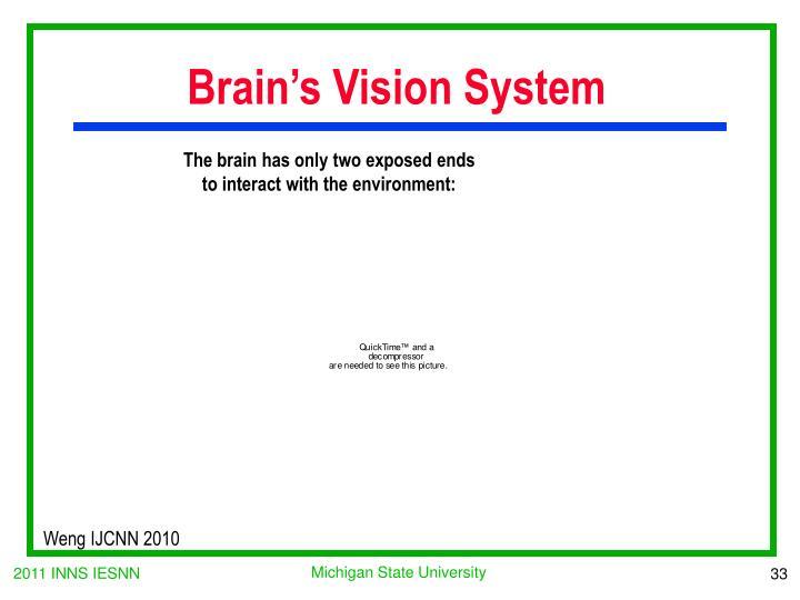 Brain's Vision System