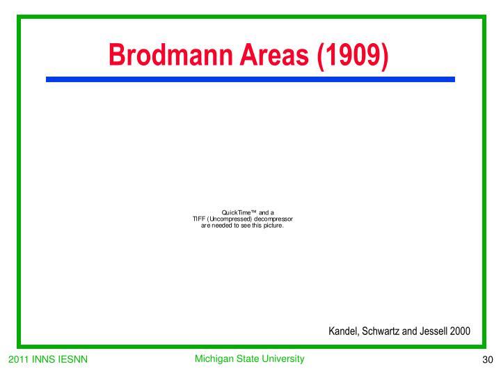 Brodmann Areas (1909)
