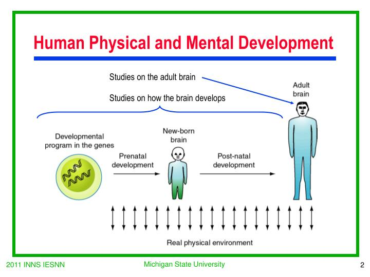 Human Physical and Mental Development