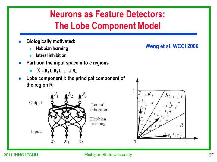 Neurons as Feature Detectors: