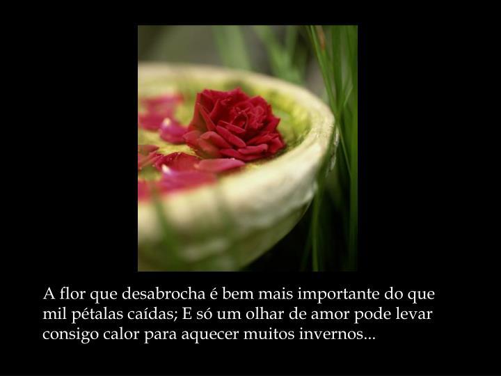A flor que desabrocha é bem mais importante do que mil pétalas caídas; E só um olhar de amor pode levar consigo calor para aquecer muitos invernos