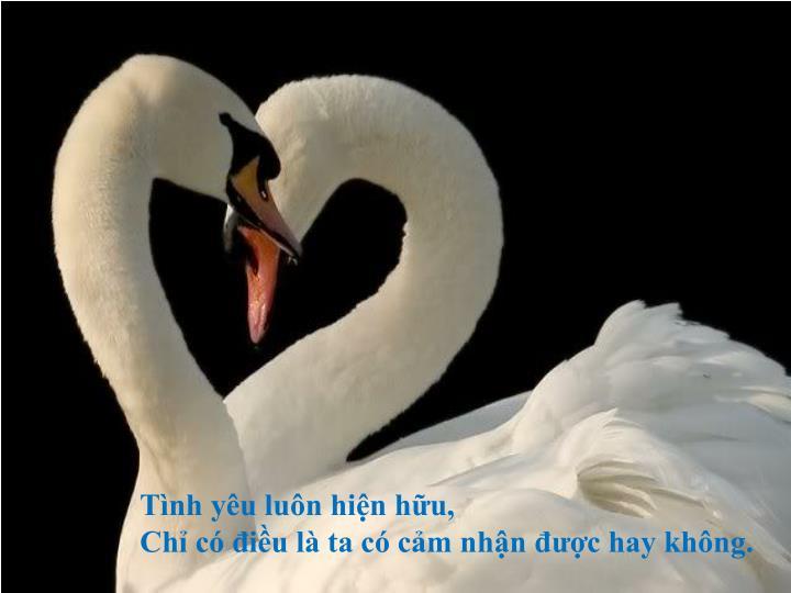 Tình yêu luôn hiện hữu,