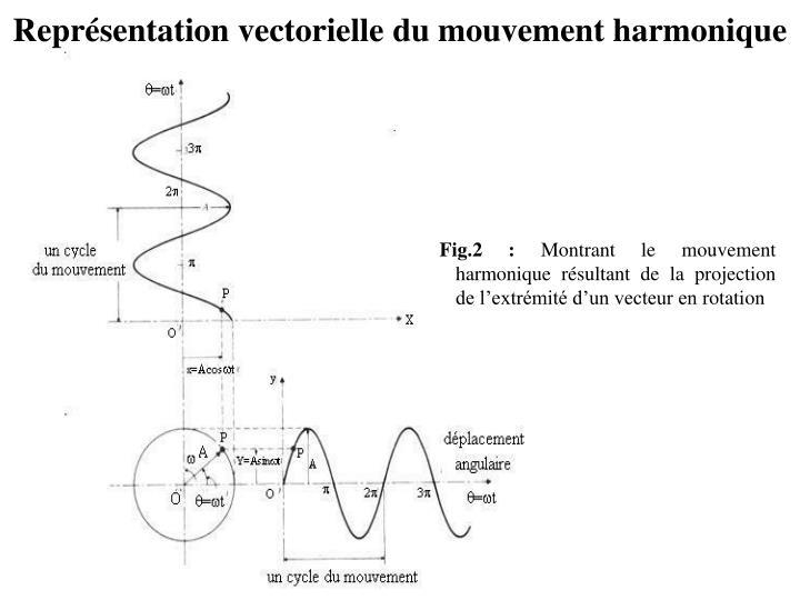 Représentation vectorielle du mouvement harmonique