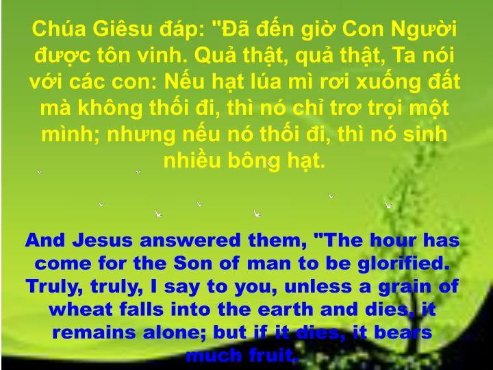 """Chúa Giêsu đáp: """"Đã đến giờ Con Người được tôn vinh. Quả thật, quả thật, Ta nói với các con: Nếu hạt lúa mì rơi xuống đất mà không thối đi, thì nó chỉ trơ trọi một mình; nhưng nếu nó thối đi, thì nó sinh nhiều bông hạt."""