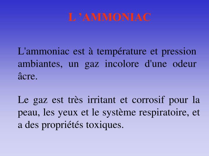 L'AMMONIAC