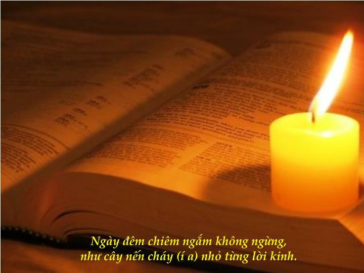 Ngày đêm chiêm ngắm không ngừng,                                                                             như cây nến cháy (í a) nhỏ từng lời kinh.