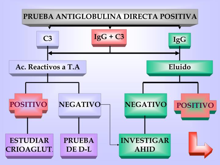 PRUEBA ANTIGLOBULINA DIRECTA POSITIVA