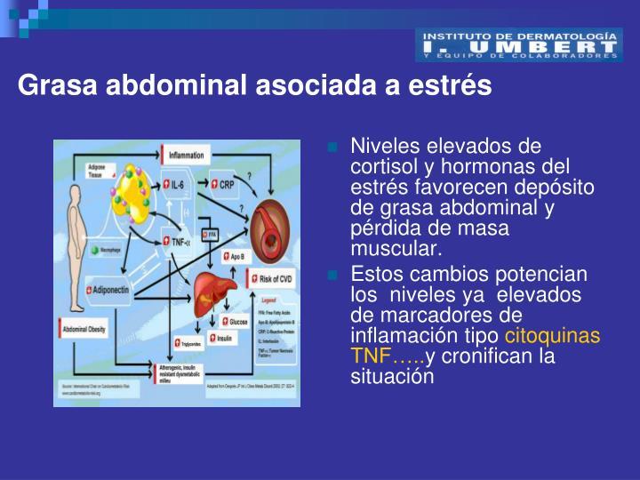 Grasa abdominal asociada a estrés