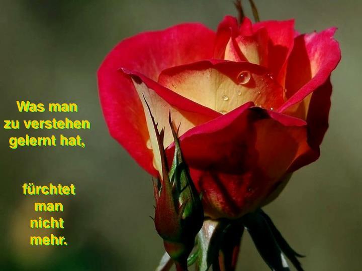 Was man