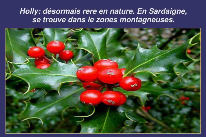 Holly: désormais rere en nature. En Sardaigne, se trouve dans le zones montagneuses.