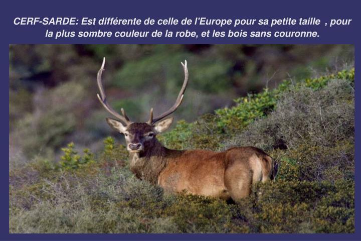 CERF-SARDE: E