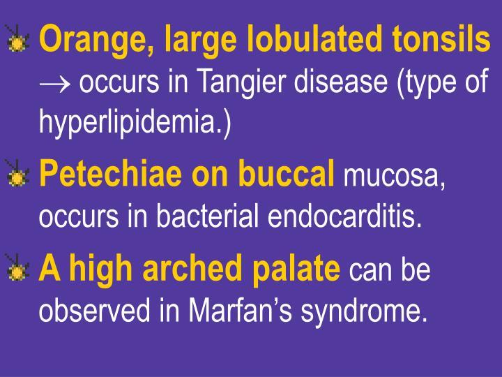 Orange, large lobulated tonsils
