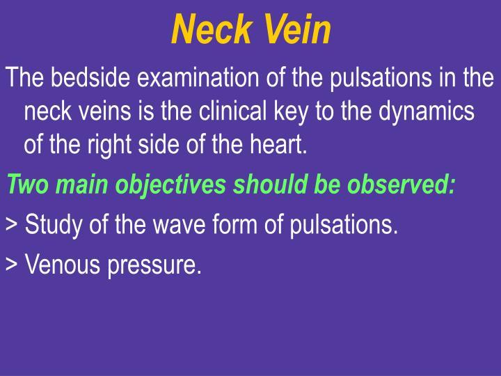 Neck Vein