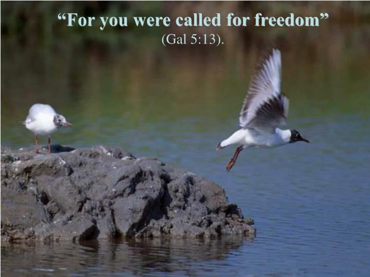 For you were called for freedom gal 5 13