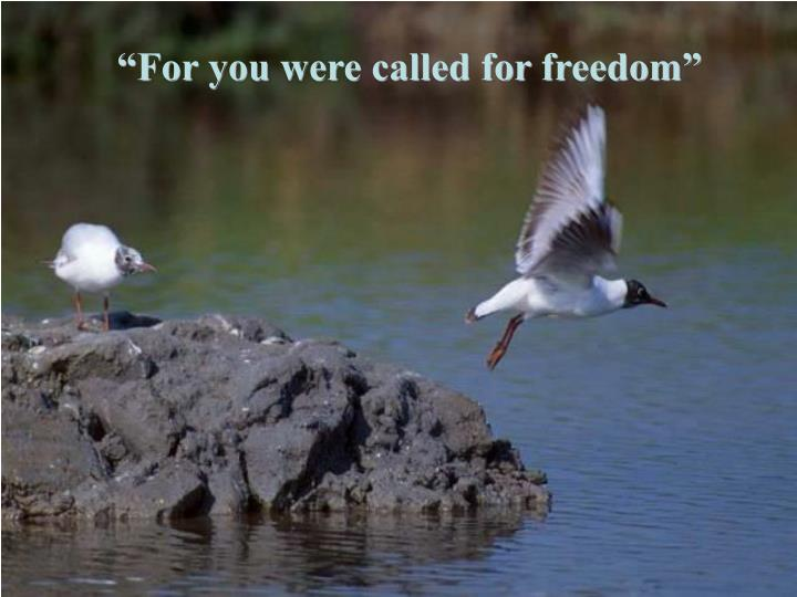 """For you were called for freedom"""