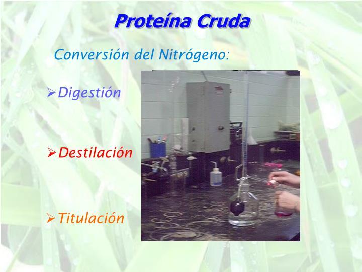 Proteína Cruda