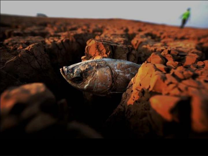 Poisson mort dans un bassin de boue dans la province de Yunnan en Chine