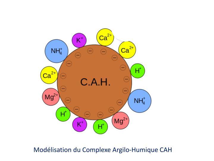 Modélisation du Complexe Argilo-Humique CAH