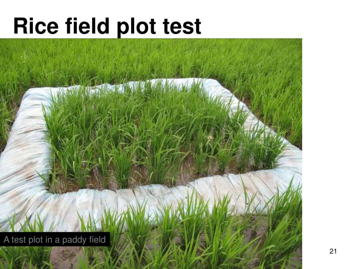 Rice field plot test