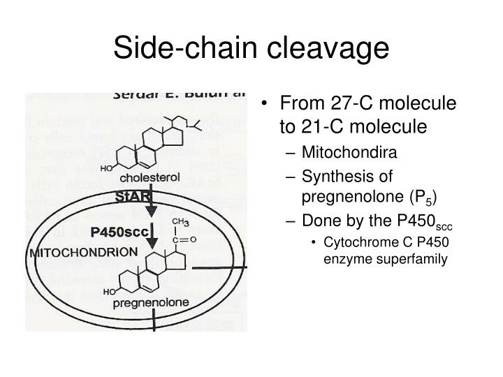 Side-chain cleavage