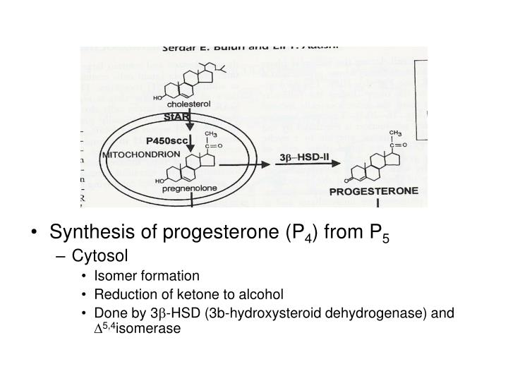 Synthesis of progesterone (P