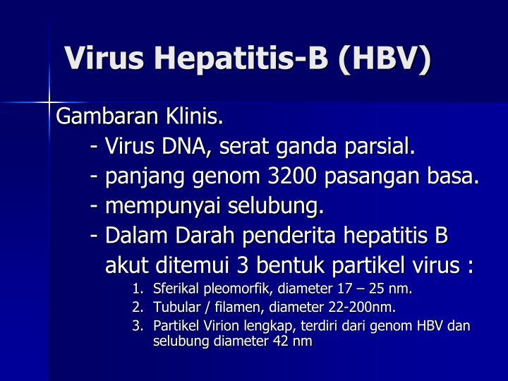 Virus Hepatitis-B (HBV)
