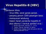 virus hepatitis b hbv